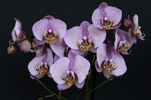 Orchids Gardening : A to Z