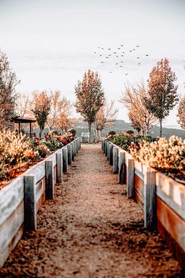 Landscape Design Sydney: Watering the Plants in Your Garden